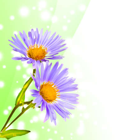 Beautiful summer flower on green abstract background photo