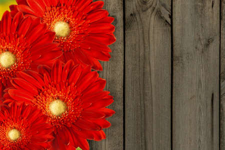 red flowers on background of old fence   photo