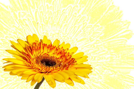 beautiful yellow flower on yellow abstract background photo