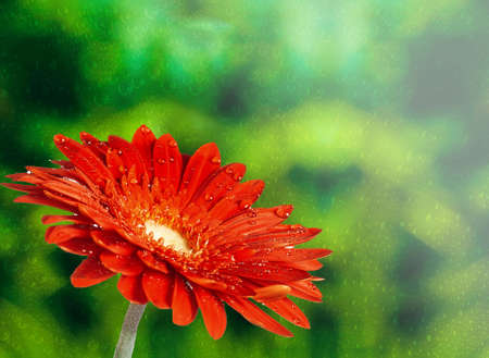 red flower on abstract background with water droplet.