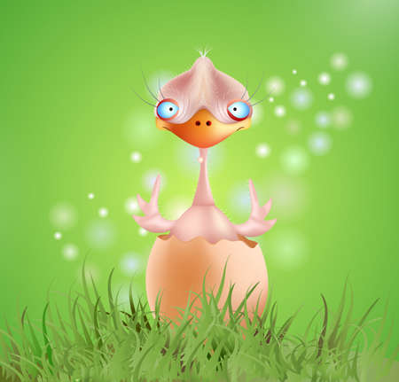 hatched: Chick hatched in the grass. Vector illustration Illustration