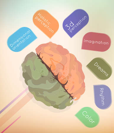analytical: The brain, the left and right hemisphere, vector illustration