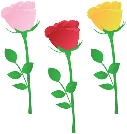 rosebud: Vector three multicolored roses - pink, red and yellow Illustration