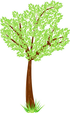 Beauty tree with green leaves and grass. Spring, ecology, enviroment protection symbol Stock Vector - 4984137