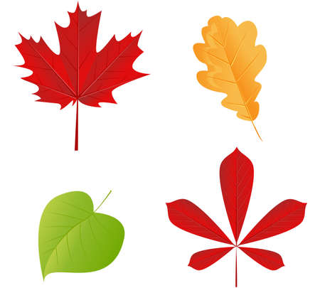 aspen tree: Vector autumn leaves set on white background