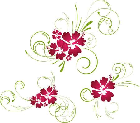 ibiscus: Elementi floreali coloratissimi hibiscus