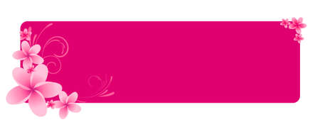 frangipanis: Pink horizontal banner with frangipani flowers and swirl ornament