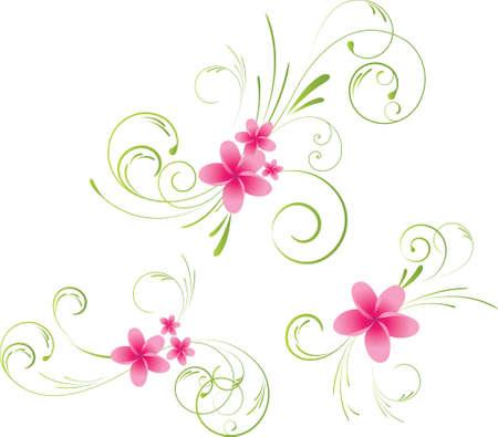 plumeria flower: Colorful plumeria floral elements