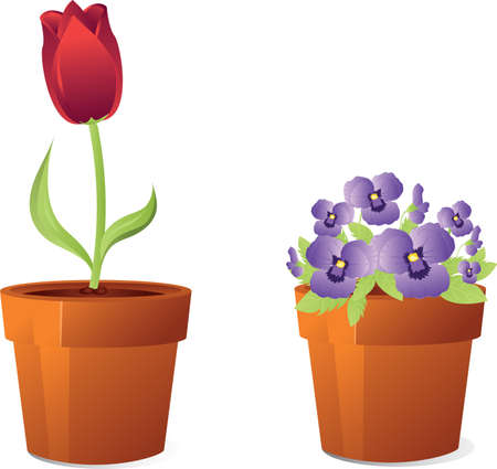 Tulip and violet flowers in orange houseplant pots