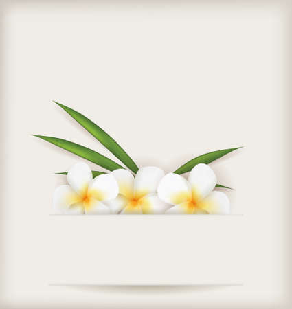 Plumeria flowers with leaves on light background Vector