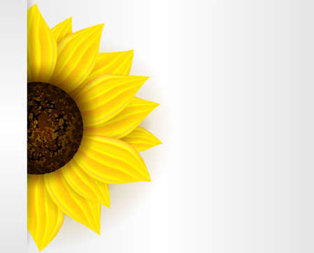 temperate: Background with part of yellow sunflower and copyspace