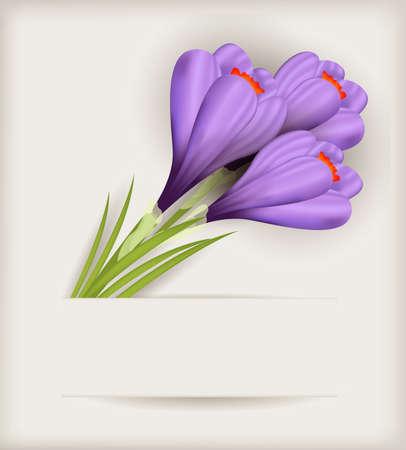 fiambres: Ramo de azafranes púrpuras sobre fondo claro