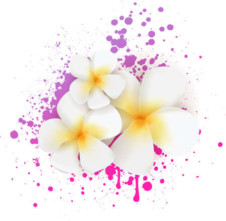 Fragipani tropical flowers on grunge splash background Vector