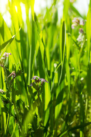 Fresh green grass close-up. Selective focus. Stock Photo