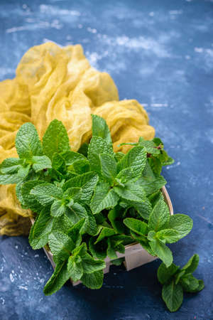 Green fresh organic mint in small wooden basket. On concrete dark table background with gauze table runner. Freshly cut mint leaves. Stock Photo