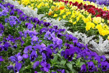 Color Flower Spring Nature Park photo