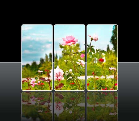 rose tree: Reflection roses