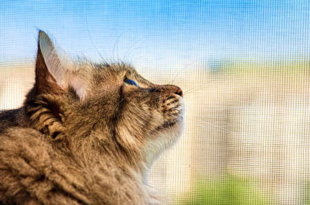 Cat looking into the distance Stock Photo - 7854406