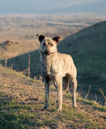 Asian wildlife dog in mountain photo
