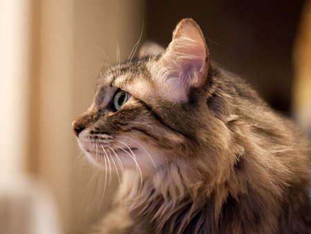whiskar: Head Cat portrait facial profile Stock Photo