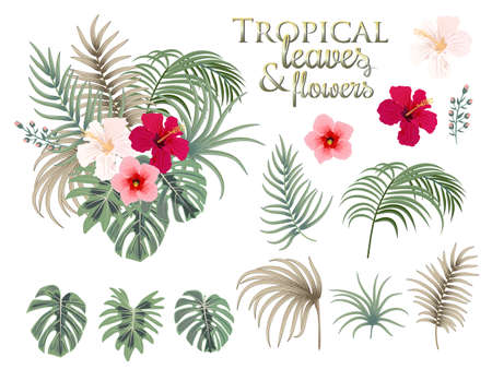 Tropical palm leaves, flowers, jungle leaves, botanical vector illustration, set isolated on white background.