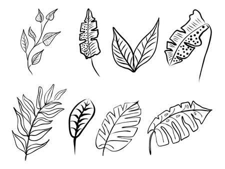 Set of abstract leaves. Hand drawn line-art. Contour black drawing, botanical element. Vector illustration for greeting cards and invitations, isolate on white background.
