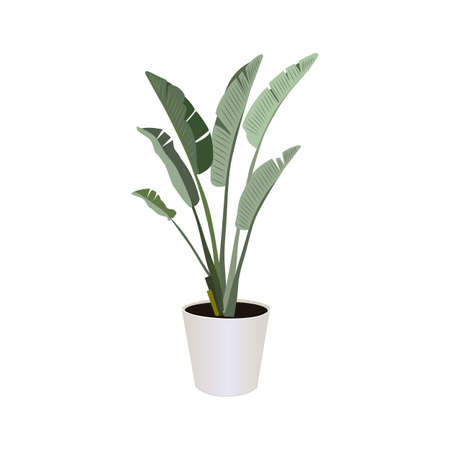 Strelitzia (Bird of Paradise), potted plant isolated on the white background, tropical plants, modern houseplants, vector illustration