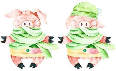 Watercolor christmas cute pigs. Handpainted watercolor winter elements. Perfect for you postcard design, wallpaper, print, invitations, packaging, etc.