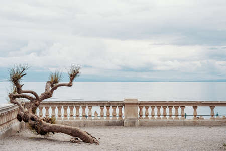 Viewpoint (with a balcony and a dry plant) to the bay of Rijeka on the Adriatic Sea. Opatija, Croatia, Europe. No people with copy space above Imagens - 132560397