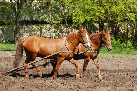 ploughing field: Ploughing the Field with Horses