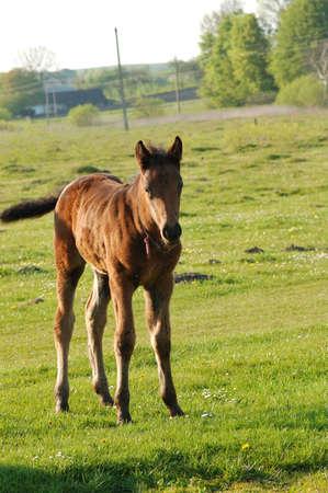 foal photo