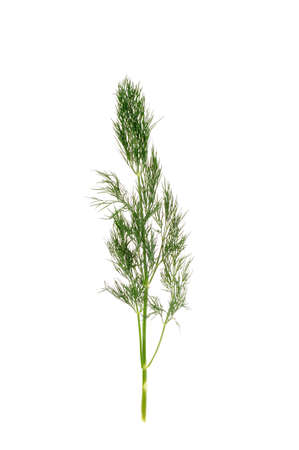 Dill isolated on the white background  photo