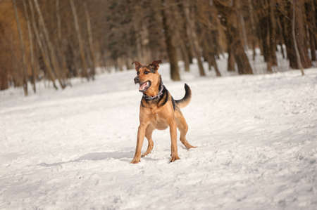 romp: dog ruuning on the snow