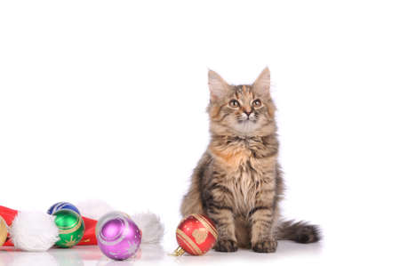 funny cat with New Years toys isolated on white