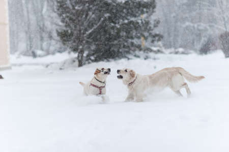 dogs playing on the snow  Stock Photo - 16858073