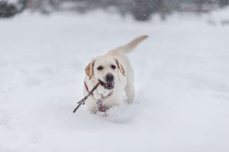 romp: dogs on the snow  Stock Photo