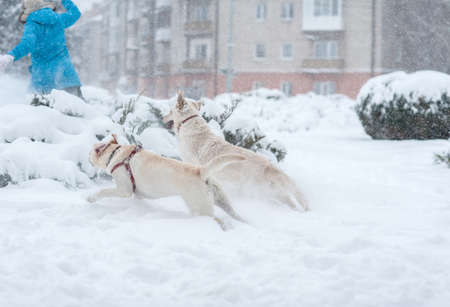 Girl playing with dogs on the snow Stock Photo - 16855491