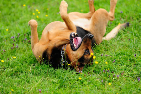 playfull dogs on green grass Stock Photo