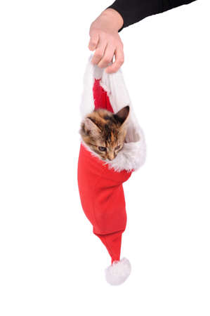 funny cat in Santa Claus cap isolated over white photo