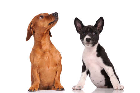 Two dogs together isolated over white background