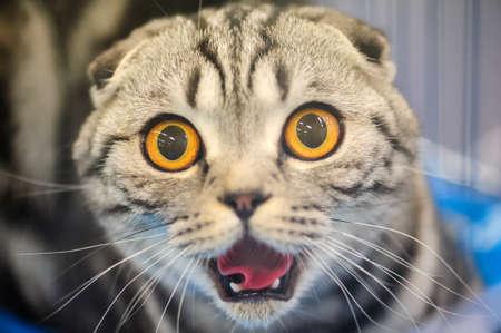 funny kočka s rozmazané pozadí Reklamní fotografie