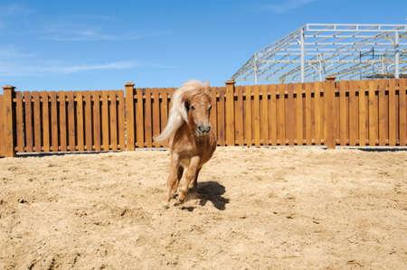 horse running on the sand