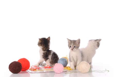 lovely: lovely kitty in the basket Stock Photo