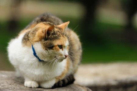 lovely: lovely kitty in the park Stock Photo