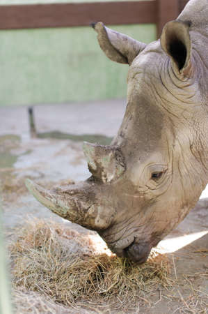rhinos close up with blurred background