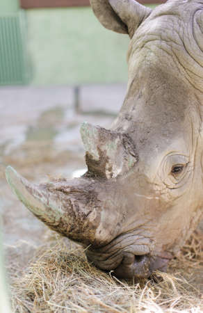 poaching: rhinos close up with blurred background