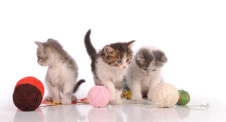 lovely kitty in the basket Banco de Imagens