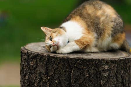 lovely kitty in the park Banco de Imagens