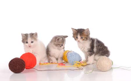 frisky: lovely kitty in the basket Stock Photo