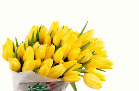 isolated on yellow: Yellow Tulips isolated over white background Stock Photo